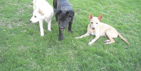 Mama's Puppies