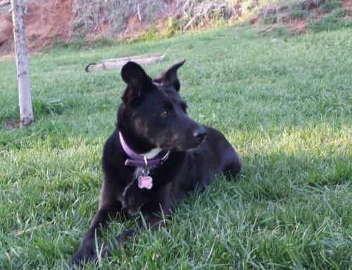 Gracie – Best Dog Ever