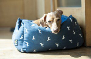 Summer Safety for Arizona Pets