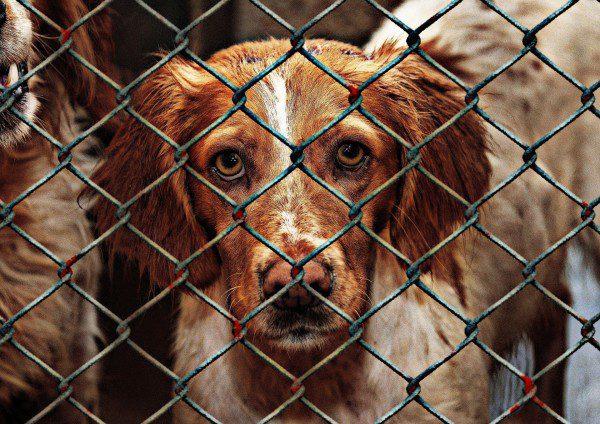 helping animals through adoption