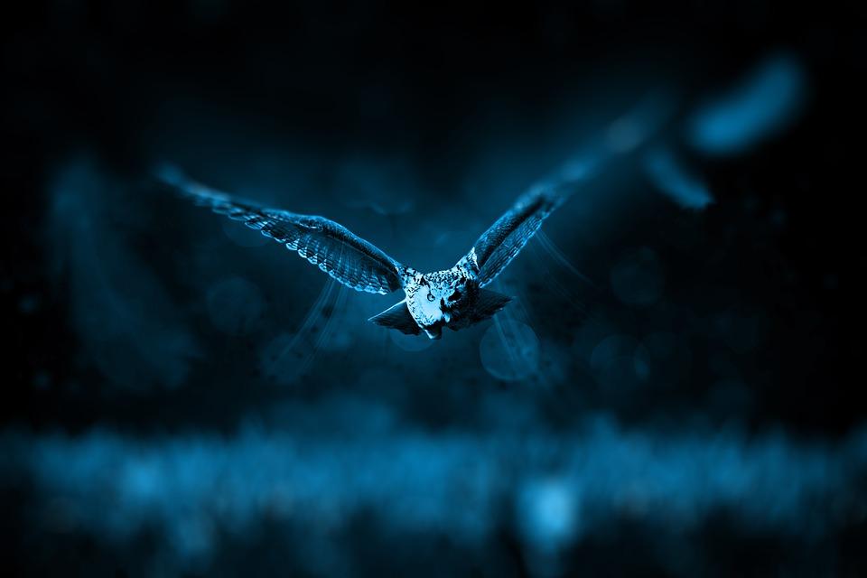 owl-hunting